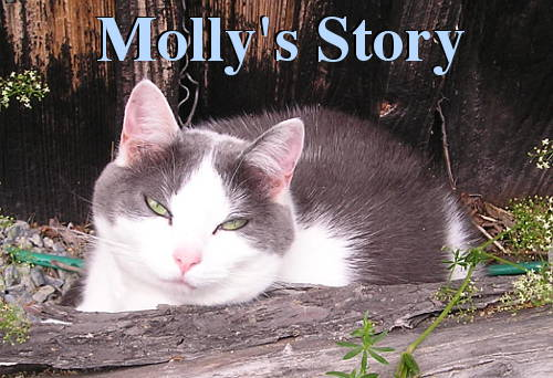 The Story of Molly